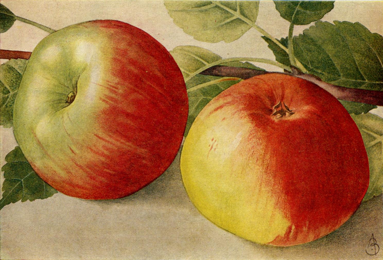 Lb appeltje voor de dorst - 3 3